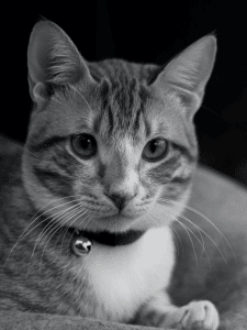 Cat in black and white photo