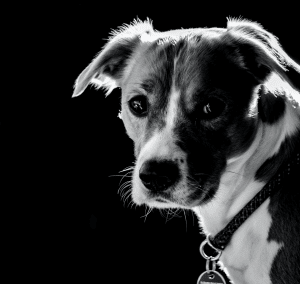 dog in black and white photo