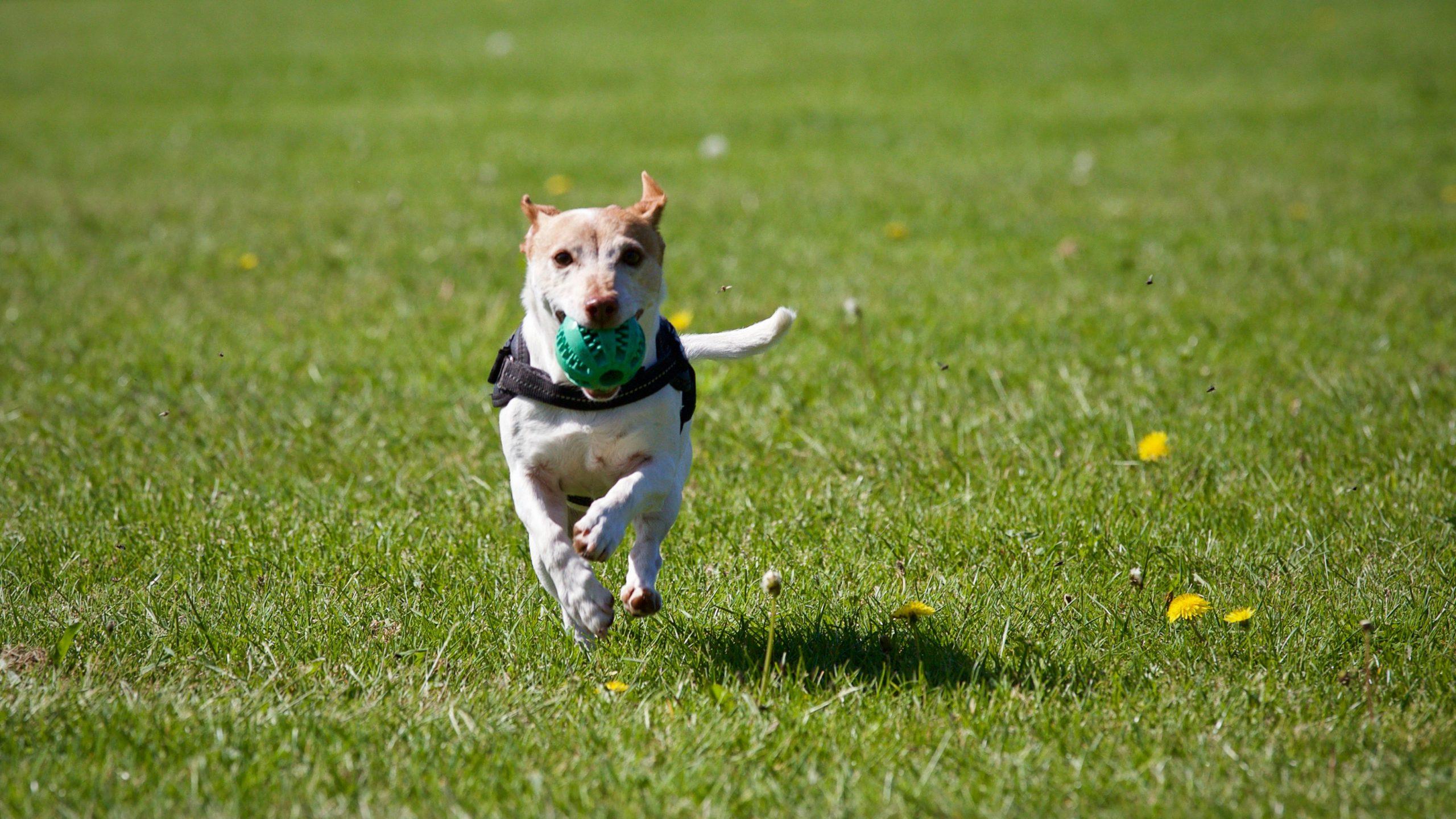 off leash dog parks Melbourne