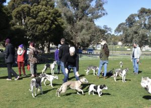 best dog walking parks in Forest Hill