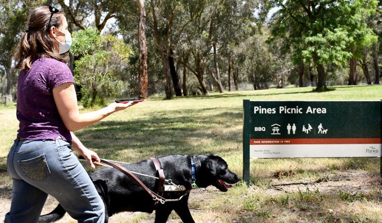 dog walking in Melbourne
