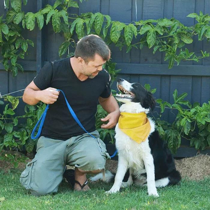 Dog Walking Service Melbourne