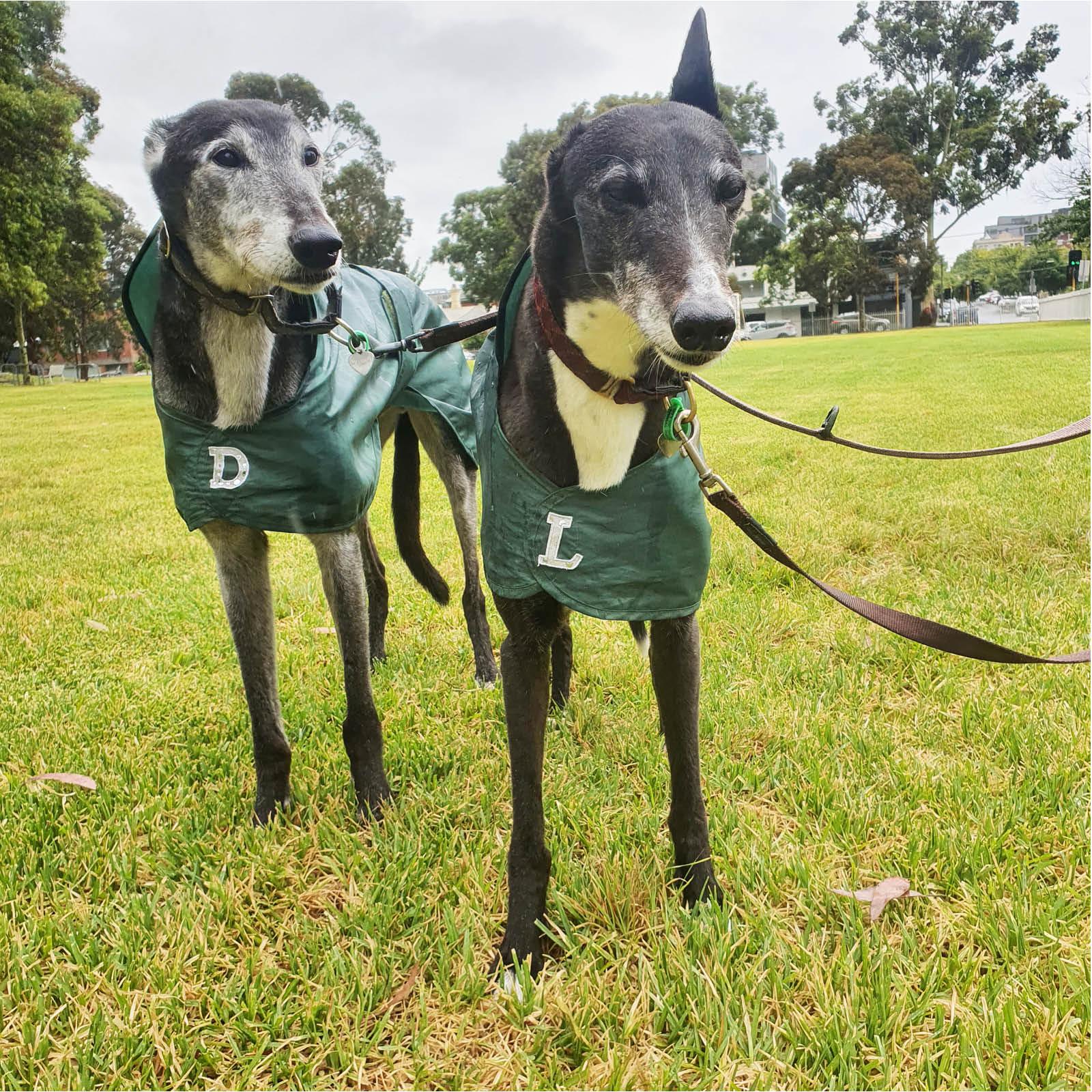 the-pet-nanny-dog-walking-service-melbourne-7