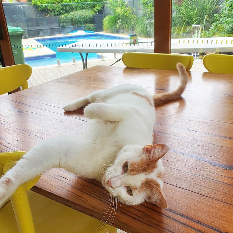 Pet Sitting Service Melbourne